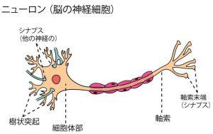 ニューロンの構造を描いた画像です。
