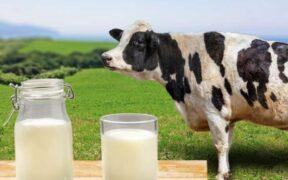 牛乳おすすめランキング15選!プロが本当においしい絶品をご紹介